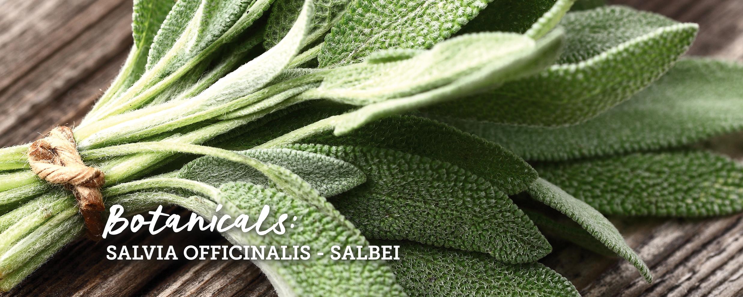 botanicals-salbei